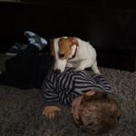 dressage chien paris