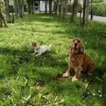 pension canine paris