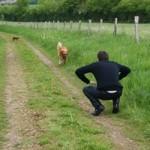 éducateur canin