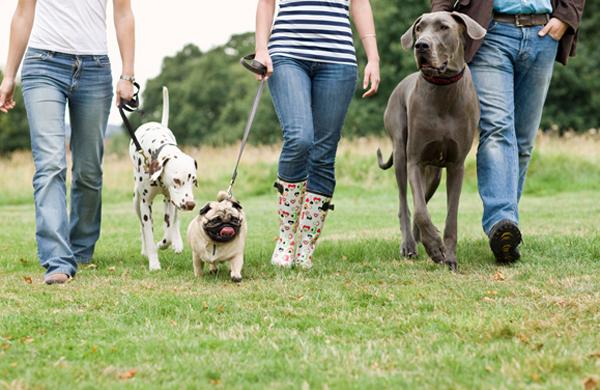 cours collectifs de dressage canin | L'école des chiens