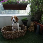 éducation canine à domicile et dressage de chien en douceur à Paris (75) et en ile de france (91, 92, 93, 94, 77, 78, 95)