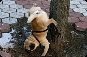la propreté du chien en ville