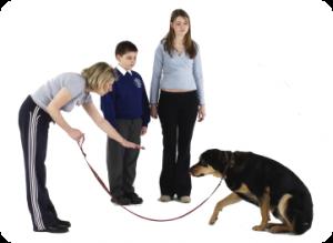 cours de dressage en famille | L'école des chiens