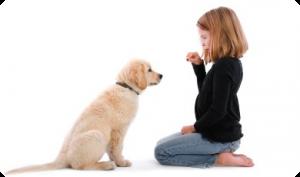 dressage canin en douceur