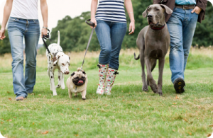 cours collectifs de dressage canin