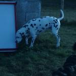 éducation canine à domicile et dressage de chien en douceur à Paris et en ile de france