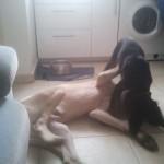 pension canine chez des éducateurs canins à paris et IDF