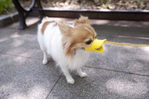 jolie museliere pour chien