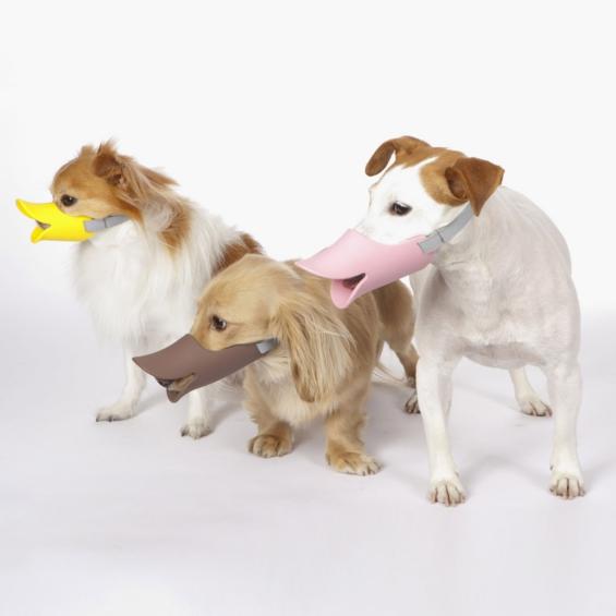 museliere fun pour chien