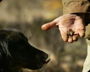 initiation au cavage pour chien